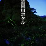 ホタル観賞【祇園川】
