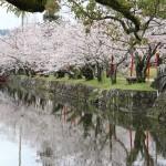 桜の開花情報&臨時駐車場【小城公園】