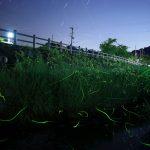 【祇園川】佐賀県小城市のホタル観賞情報