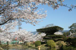 小城公園【開花情報】