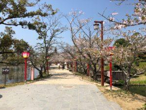 小城公園【桜情報】