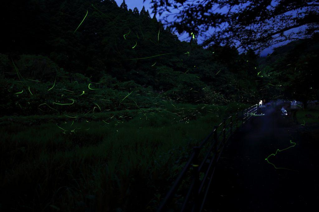 【祇園川】ホタル情報