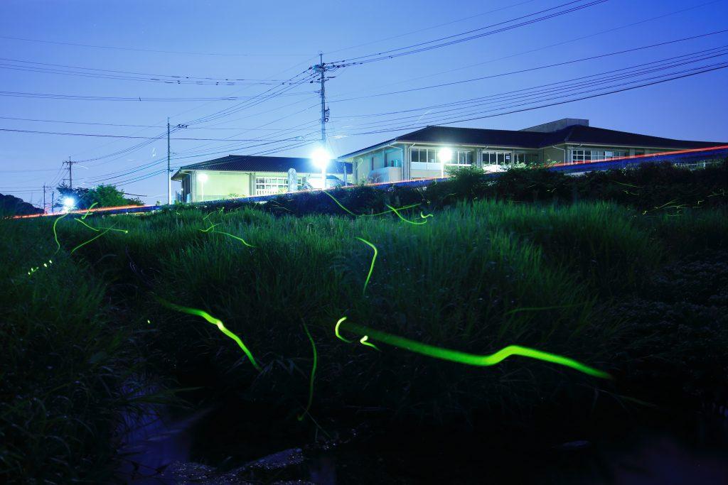 2019ホタル情報【祇園川】