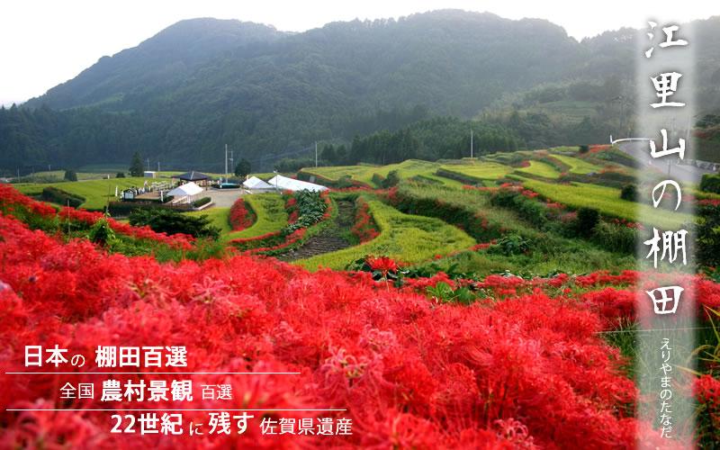 江里山の棚田と彼岸花(Eriyama tanada)