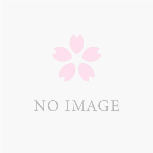 桜開花情報【小城公園】